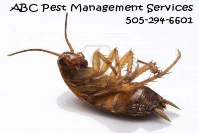 General pest Control Services and Termite Control: An Interview with ABC Pest Management